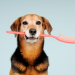dogwithtoothbrush[1]-(2)